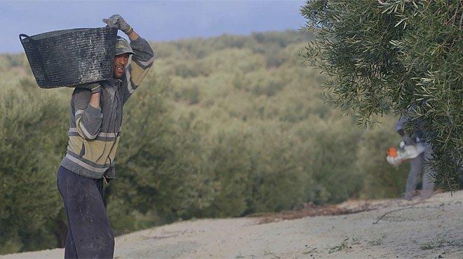 Sinfiltros.com: El drama de los temporeros en Jaén.