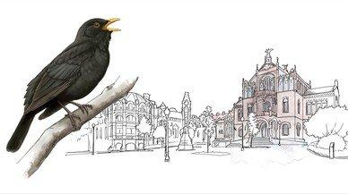 Un atles censa barri per barri les 83 espècies d'aus que nien a Barcelona