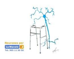 Neurones per a 'La Marató' de TV-3.