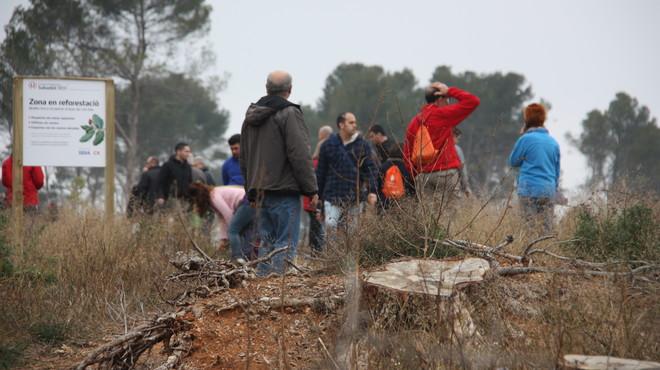 Voluntarios participando en la reforestaci�n del bosque de Can Deu en Sabadell.