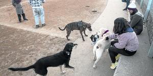 Chuchos en el patio 8Vecinos con sus perros en la nueva zona de recreo canino de Nou Barris.