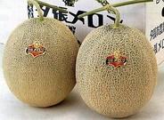 Dos melones de la marca Yubari.�