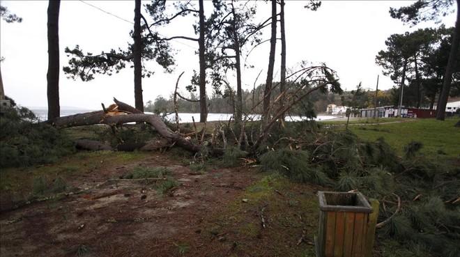 Destrozos causados por el viento en Cabanas (A Coruña).