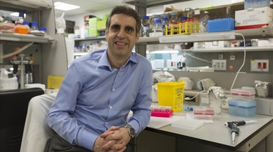 Manel Esteller, en un laboratorio del Institutd'Investigaci� Biom�dica de Bellvitge (Idibell), en L'Hospitalet.