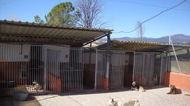La gran entrada de gatos pequeños satura la Protectora de Animales de Sabadell