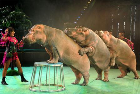 Resultado de imagen para imagenes de animales en un circo