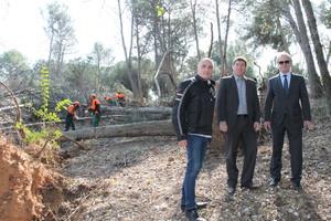 Sabadell adjudica la retirada dels arbres caiguts pel vendaval