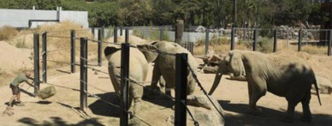 BCN abre el mel�n del futuro zoo
