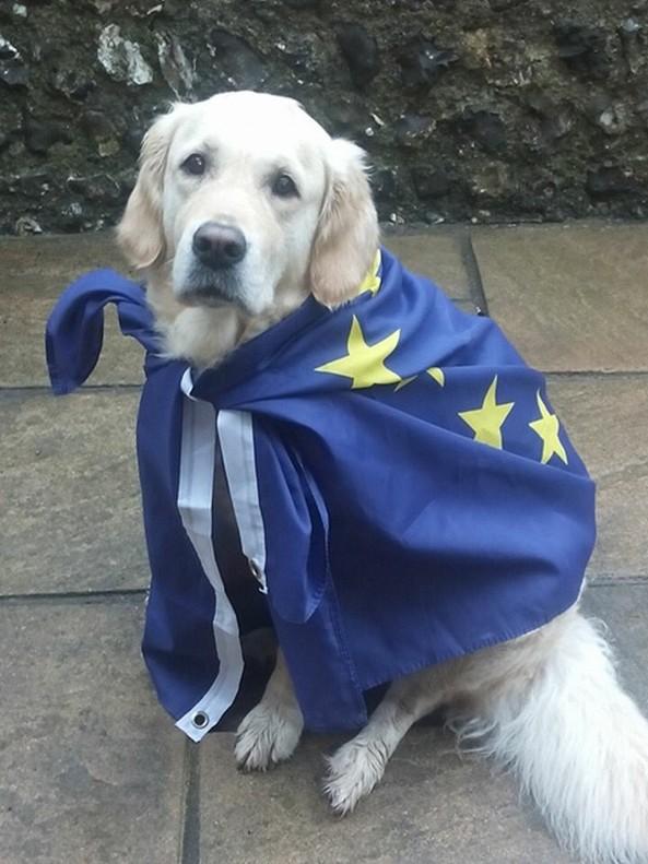 Centenars de britànics pengen fotos dels seus gossos en centres de votació del #brexit