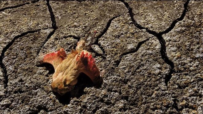 Flamenco muerto por una sequ�a en Tanzania en el 2013