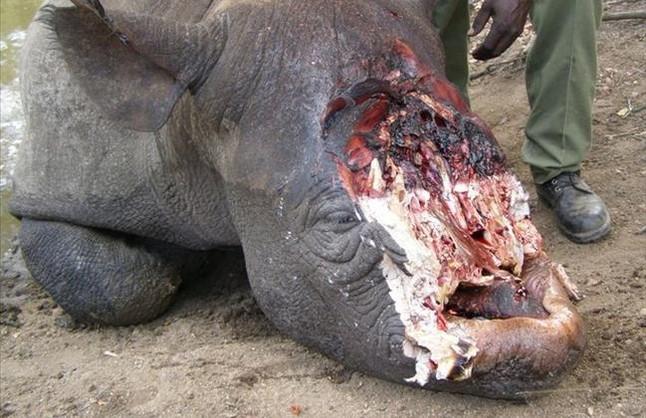Rinoceronte - Informacin y Caractersticas - Biologa