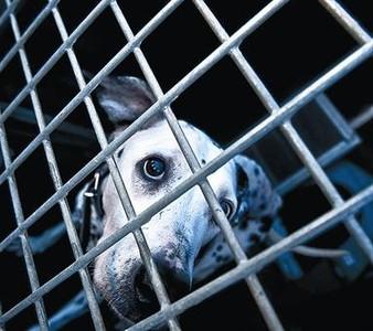 Un can en la perrera municipal de Barcelona, en diciembre.