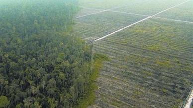 El aceite de palma es una de las principales causas de deforestación del planeta