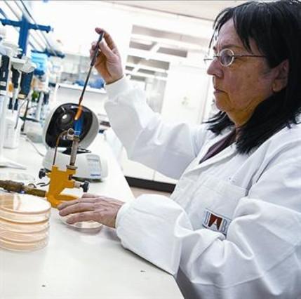 Virus contra salmonelas