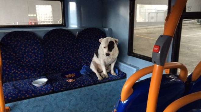 Un gos abandonat passa la nit en un bus de Londres