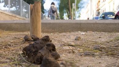 Tarragona contracta detectius per lluitar contra les caques de gos