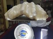 La supuesta perla de 34 kilos.