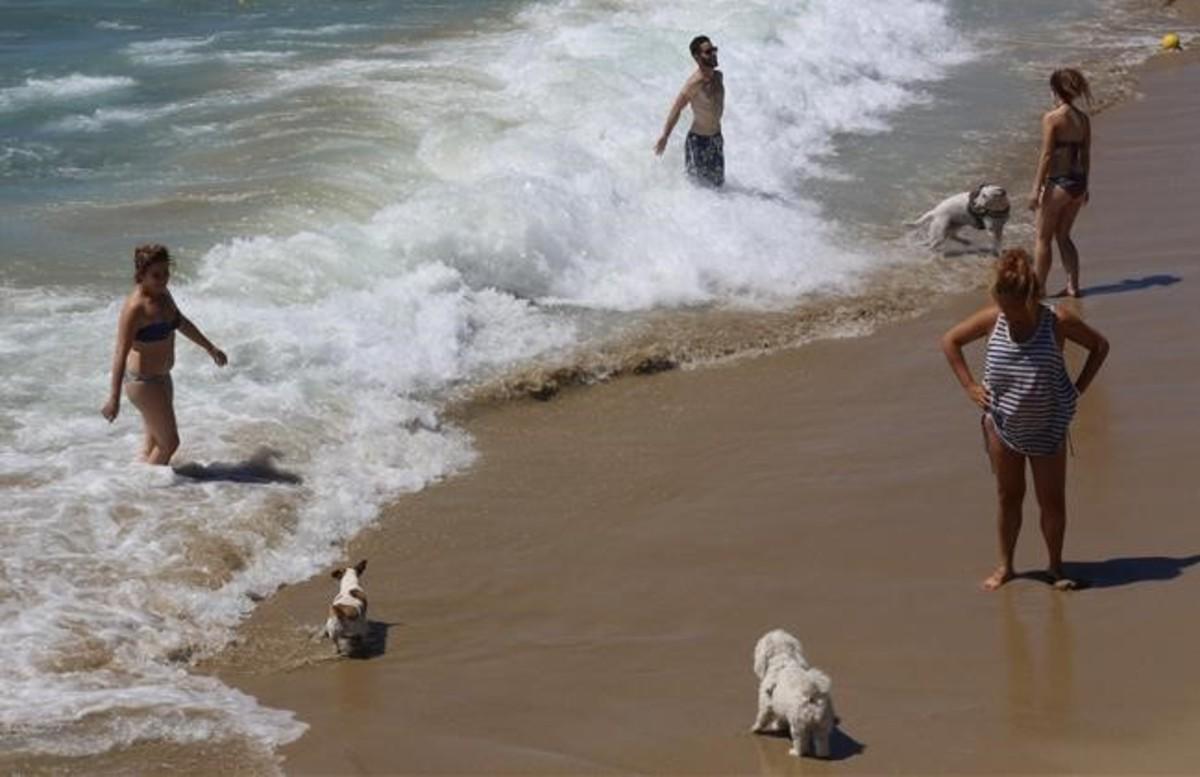 La platja per a gossos de Llevant obrirà durant tot l'estiu