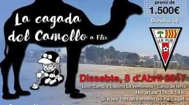 Amb un camp de futbol i un camell, a Flix es munten un bingo: 1.500 euros si defeca a la teva casella