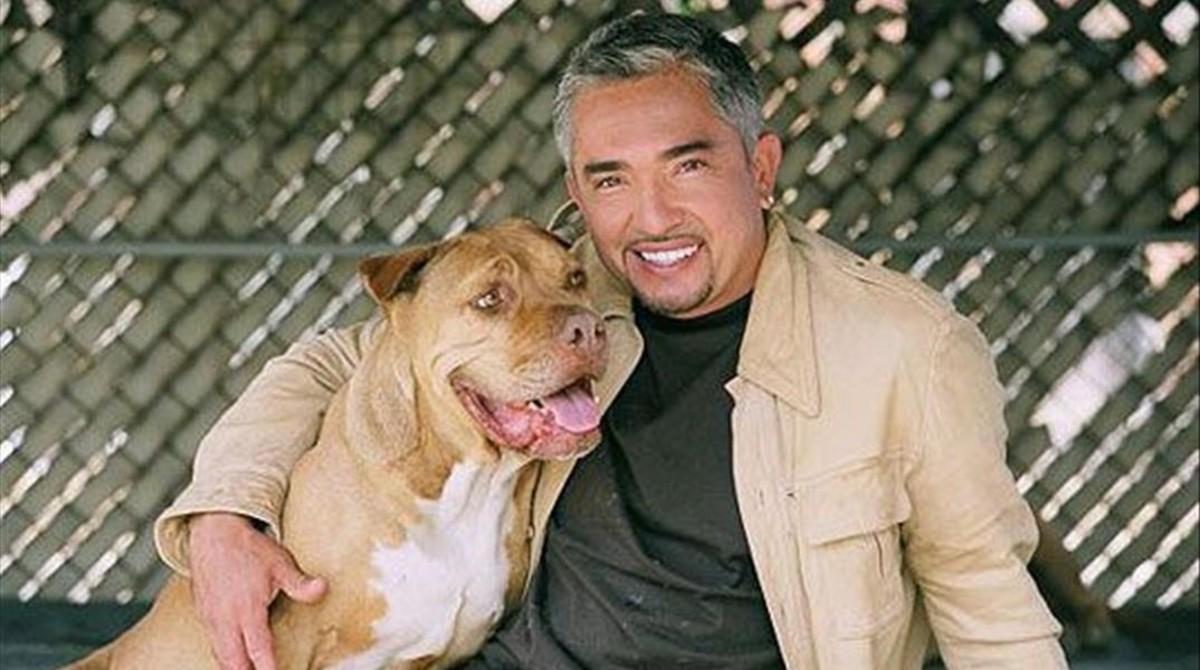 El 'encantador de perros', acusado de maltrato animal