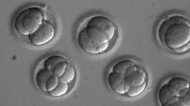 Corrigen en embriones una mutación genética que causa muerte súbita