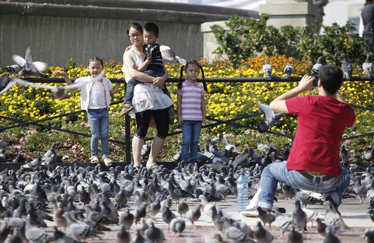 Los excrementos de paloma de la plaza de Catalunya causan la invalidez de una guía turística