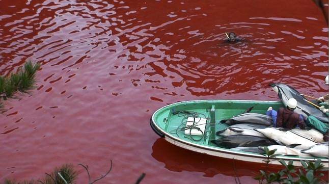 La aldea japonesa famosa por las matanzas de delfines abrirá un parque acuático