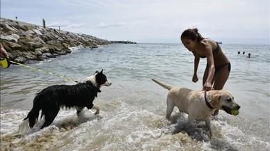 El paradís de platja per als gossos... i el corral