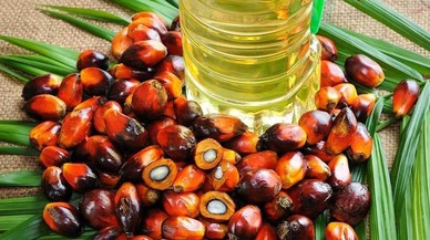 Cerco al aceite de palma