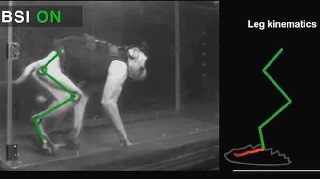 Un macaco recupera la mobilitat en una extremitat gràcies a un bypass a la medul·la espinal