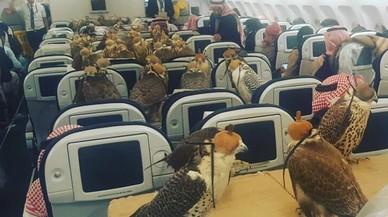 Un príncep saudita paga el bitllet d'avió als seus 80 falcons