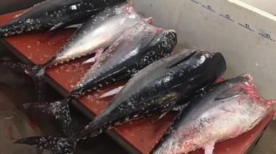 Denunciades dues empreses per vendre tonyina sense garanties a Barcelona
