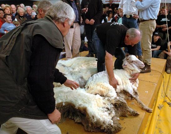 Nueva Zelanda pide que la esquila de ovejas sea una modalidad olímpica