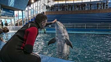 Adéu al delfinari