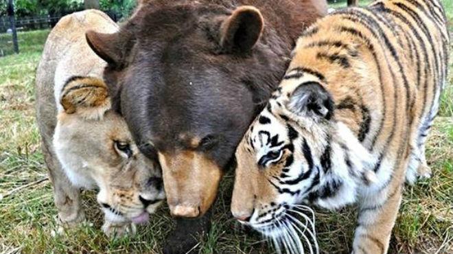 Los tres animales son como tres hermanos