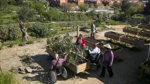 Usuarios del huerto comunitario de inclusión social de Can Pinyol, en Sant Boi.