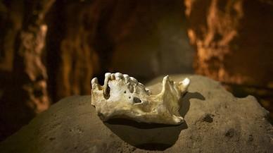ADN fòssil