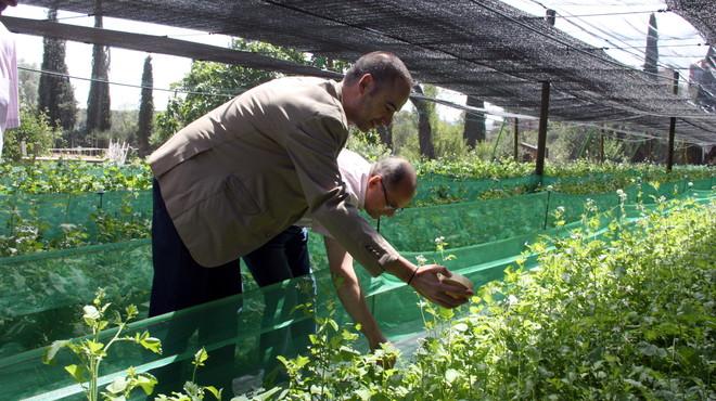 Personas con discapacidad mantendrán una granja de caracoles en Sabadell para venderlos