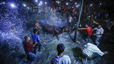 Nepalesos llancen aigua sobre un búfal borratxo, durant el seu sacrifici per a la celebració del Nawami en honor a la deessa Durga,a Bgaktapur.