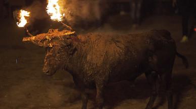 """Vídeo polèmic del PACMA: La """"tortura del foc"""" del Toro Jubilo de Medinaceli"""
