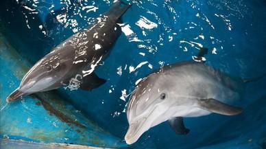 Colau sospesa cinc alternatives per als dofins del Zoo de Barcelona