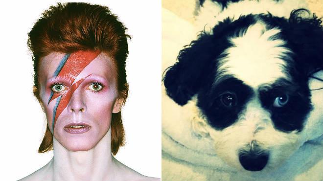 Imagen de Bowie y su perro Max donde se puede apreciar la diferencia del color de sus pupilas