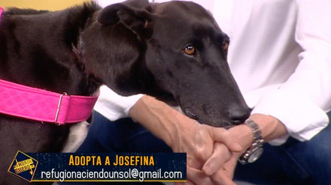 Josefina, el galgo que venció a la horca