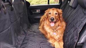 amazon perro