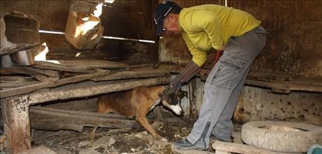 Rescate de uno de los canes maltratados en Montcada