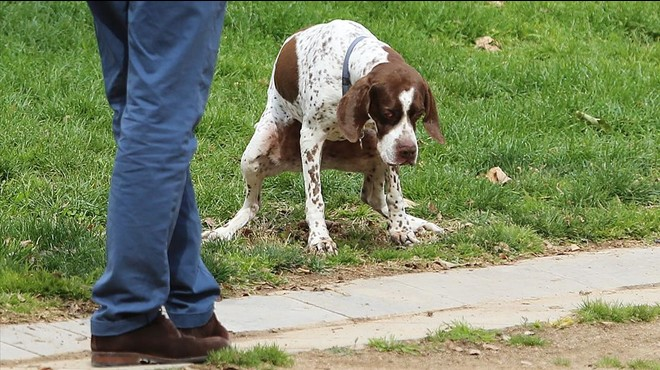 Els ajuntaments promouen anàlisi d'ADN per multar pels excrements dels gossos