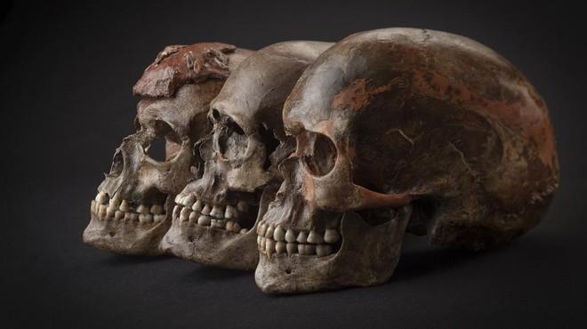 Tres cr�neos de unos 31.000 a�os de antig�edad localizados en el yacimiento de Dolni Vestonice, en la Rep�blica Checa.