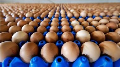 Sanidad dice que no se han distribuido huevos contaminados en España