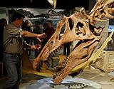 El paleont�logo Paul Sereno, junto a la reconstrucci�n de un craneo de 'Spinosaurus aegyptiacus' en una exposici�n de la National Geographic Society.