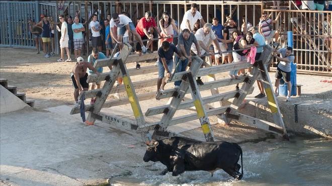 La guerra dels bous